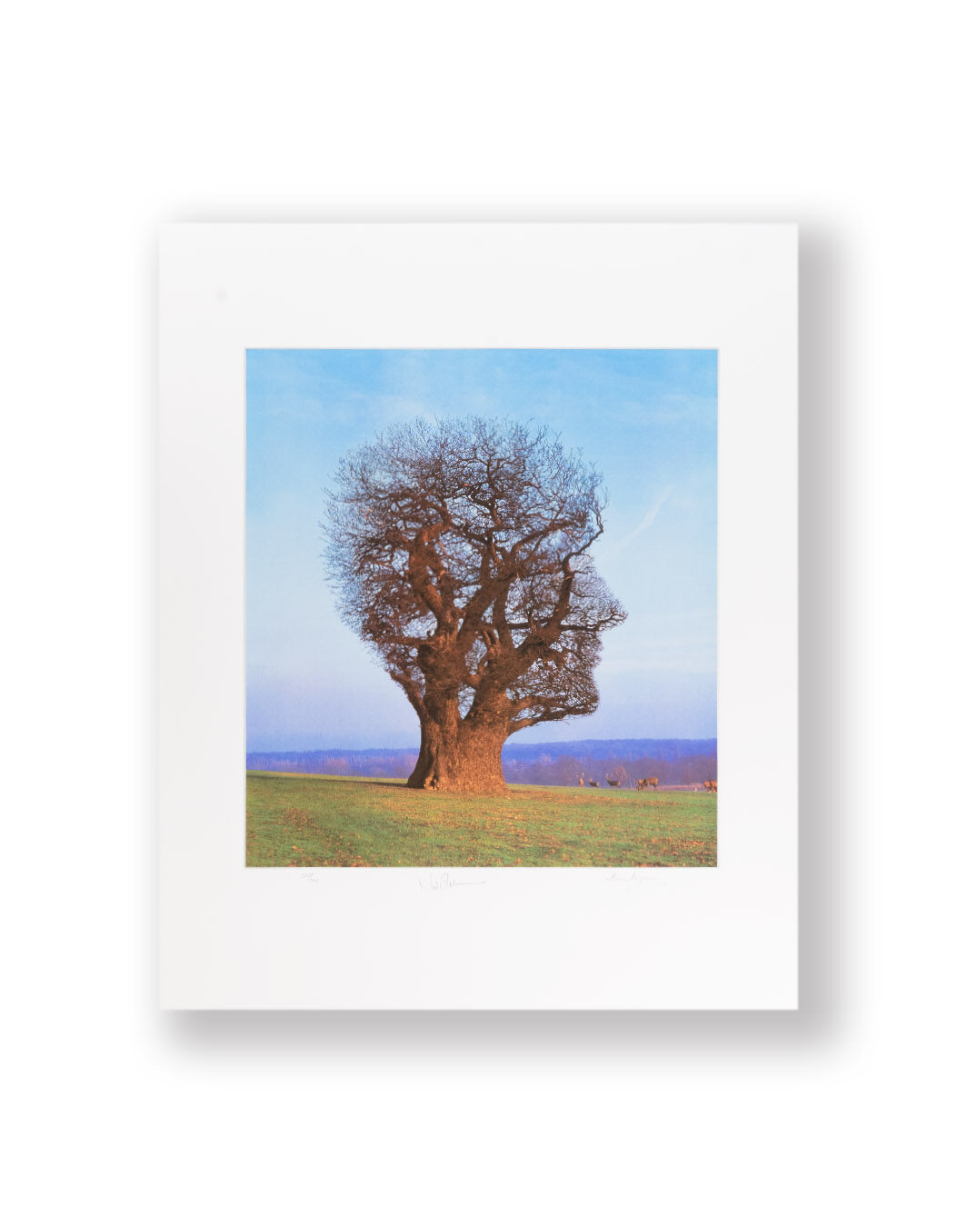 PRINT SIGNED BY ARTIST STORM THORGERSON
